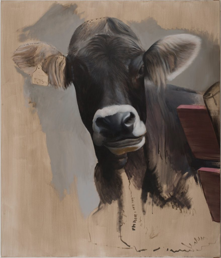 Kuh 1 © Diethard Sohn 2017