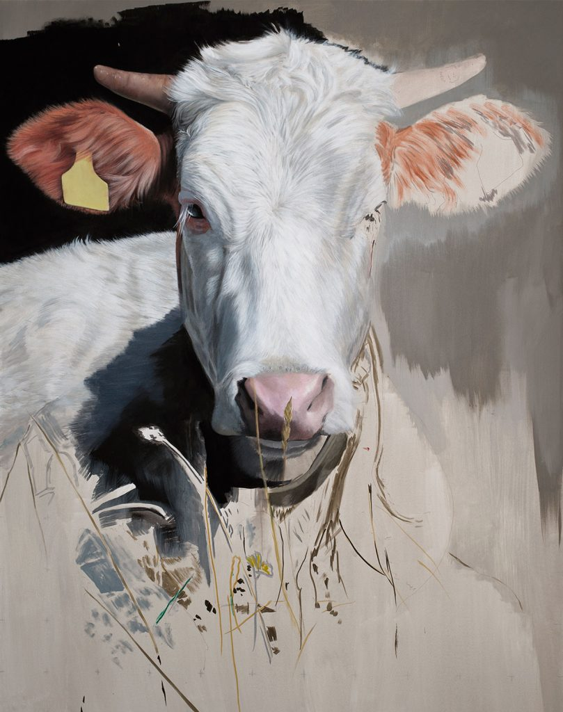Kuh 2 © Diethard Sohn 2017
